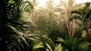Image courtesy of http://footage.shutterstock.com/clip-1191091-stock-footage-palms-and-trees-waving-to-the-wind-of-a-storm-and-rain-in-a-tropical-jungle-surrounding.html